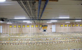 Ontario chicken farmer Hugh Haverkamp chose a hydronic heating system to heat his farm in Listowel, Ontario, Canada, because it is safe, clean and efficient. Photo credit: Aquatherm